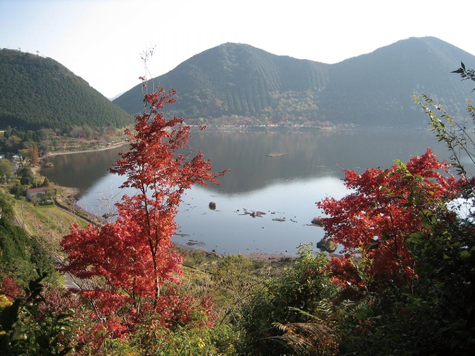 美しい自然を満喫! 藺牟田池湖畔の散策